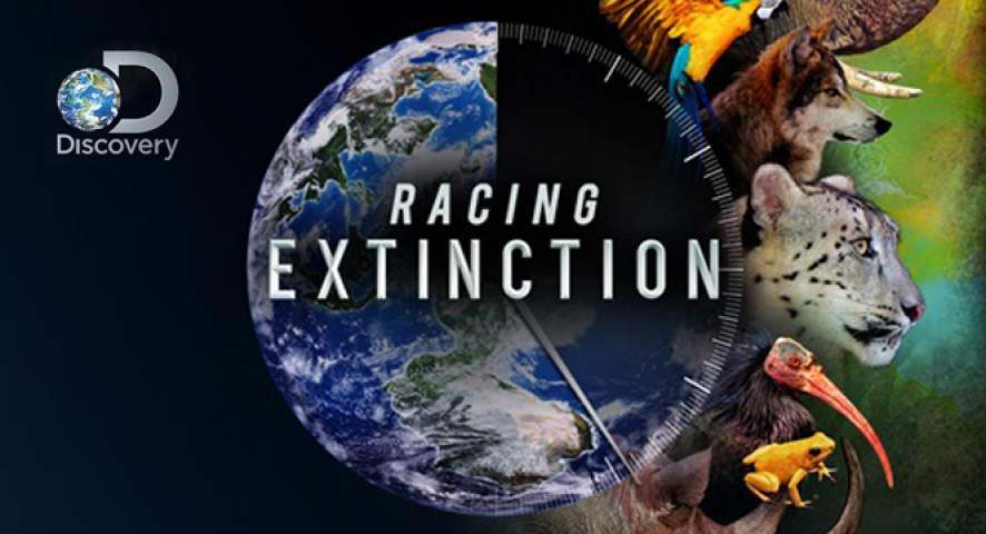 de extinction essay